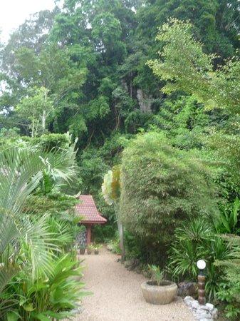 Hotel Khao Sok & Spa: Jardín