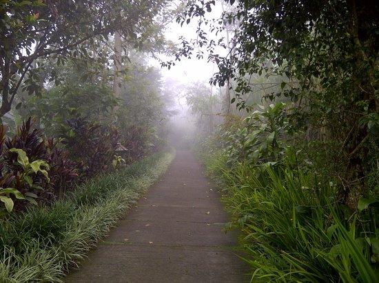 Munduk Moding Plantation : quiet pathways at Munduk Moding