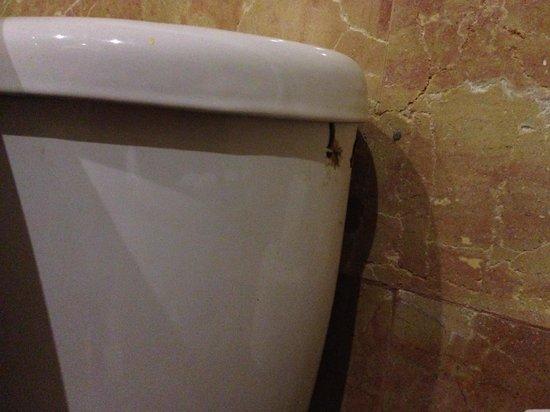 Catalonia Bavaro Beach, Casino & Golf Resort: WC not clean (terrible)