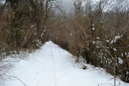 Dachigam National Park, Ινδία: Dachigam in Winters
