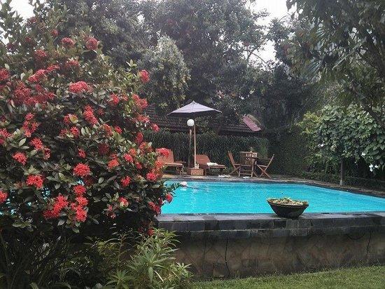 Rumah Mertua Boutique Hotel & Garden Restaurant & Spa: Pool