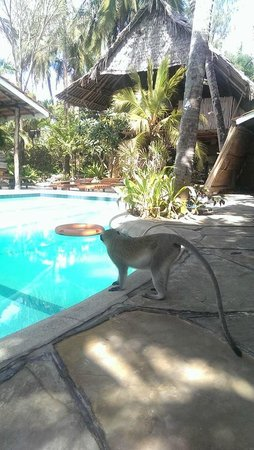 Ziwa Beach Resort: The swimming pool is very well maintained and you get music of your choice while swimming