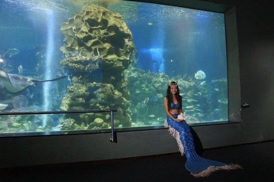 Vinpearl Nha Trang Resort : Русалочка в Океанариуме