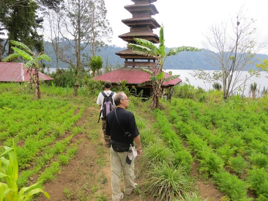 Terrasse du Lac Tamblingan - Day Tours: Twin lakes trekking with stops at some temples