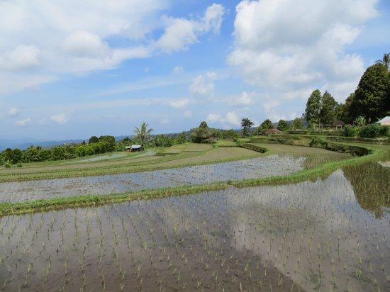 Terrasse du Lac Tamblingan - Day Tours: Rice fields trekking Munduk region
