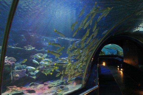 Vinpearl Nha Trang Resort : Океанариум