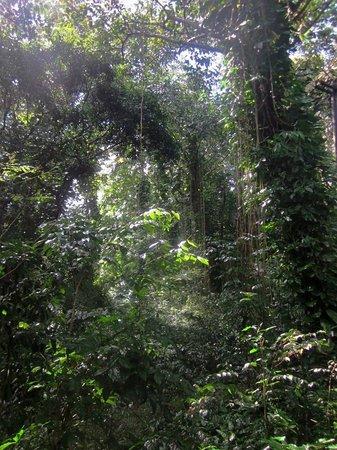 Jardin Botanico: Джунгли