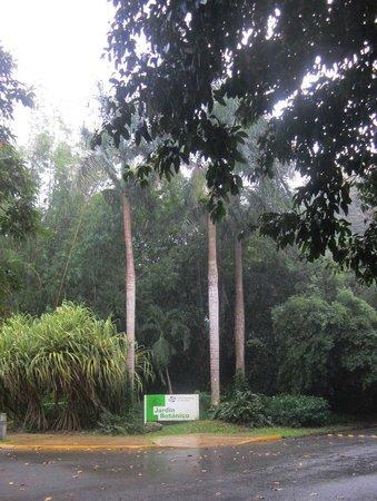 Jardin Botanico: Дождь