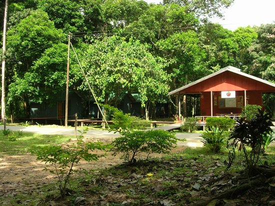 Sukau RB Lodge : our chalet (the green one on the left)