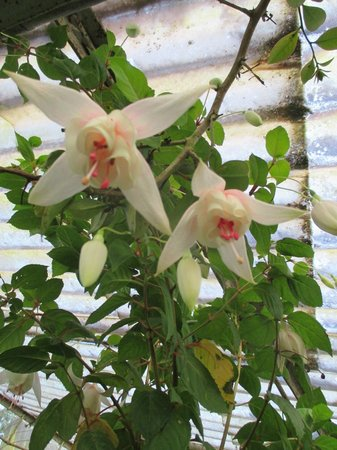 Rose Gardens: flowers