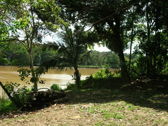 Sukau RB Lodge: view from the lodge
