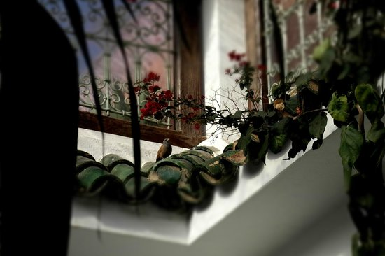 Riad Les Bougainvilliers: hoteltuin