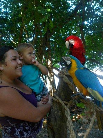 Dolphin Cove: parrots! lol