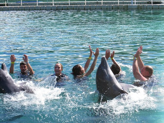 Dolphin Cove: dolphins were amazing