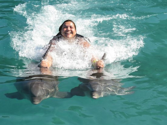 Dolphin Cove : unforgettable