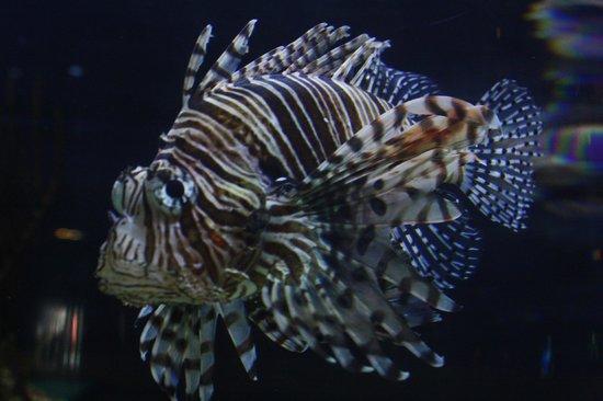 National Aquarium: Aquarium life