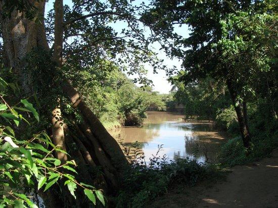 Fig Tree Camp: Floden hvor teltene lå helt ned til