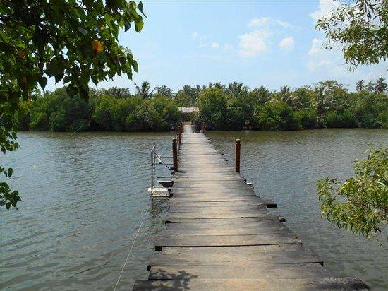 Mangrove Beach Cabanas & Chalets: Steg