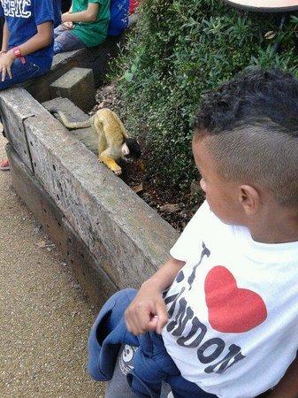ZSL London Zoo: ago 2013