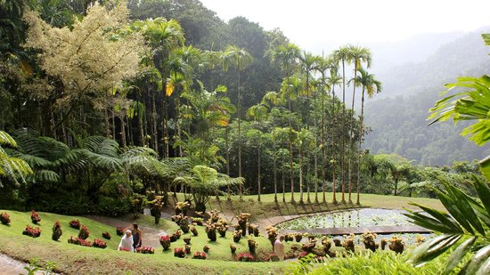 Martinica i giardini di balata foto di giardini di - Giardini fantastici ...