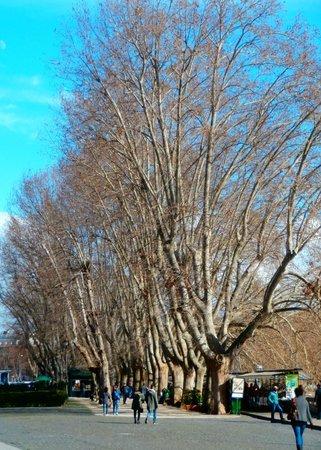 Hotel Santa Maria: many trees along the river ( Tibor ) a five minute walk away