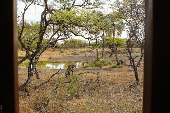 Onguma Bush Camp : tentcamp