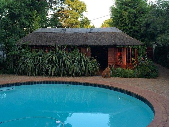 Ghandi Backpackers Lodge: pool/bar