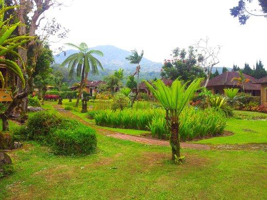 Enjung Beji Resort : garden at Enjung Beji