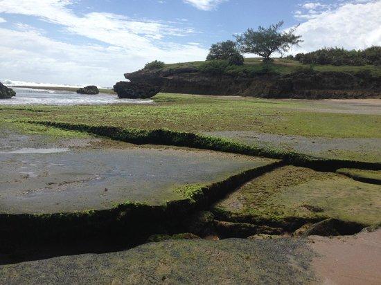 Casa na Praia Tofo: tofino