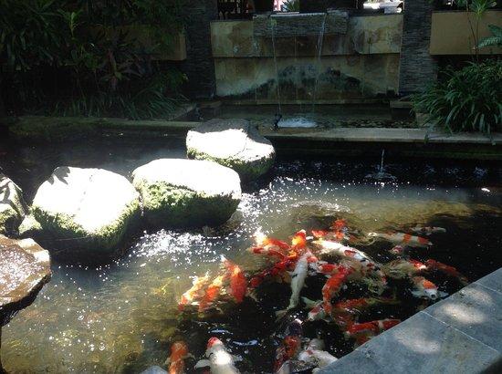 Risata Bali Resort & Spa: Можно покормить рыб :)