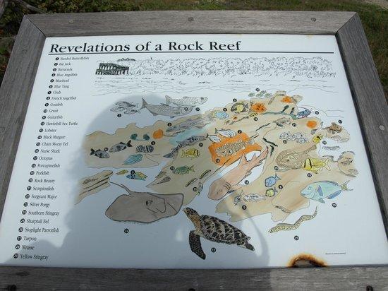 John D. MacArthur Beach State Park: McArthur Park