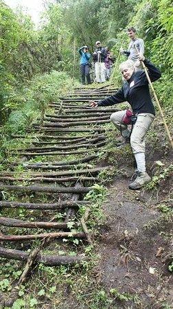 Mount Gahinga Lodge : Climbing in Mgahinga Nat Park to see Golden Monkeys
