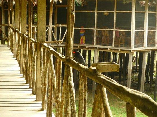 Amazonia Expeditions' Tahuayo Lodge : Lodge Principal Habitacion 16: Vista hacia sala