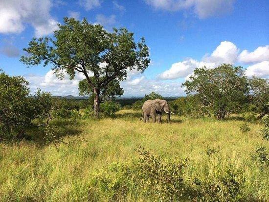 Elephant Herd Tours & Safaris: Kruger National Park Morning Safari
