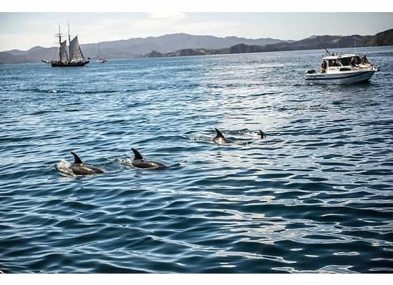Bay of Islands Sailing/Gungha II: Bay of Islands sailing
