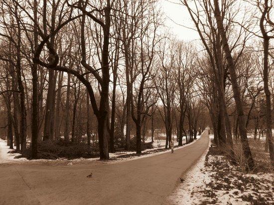 Łazienki-Park (Park der Bäder): foto