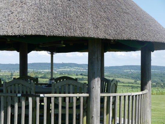Primrose House : Garden view