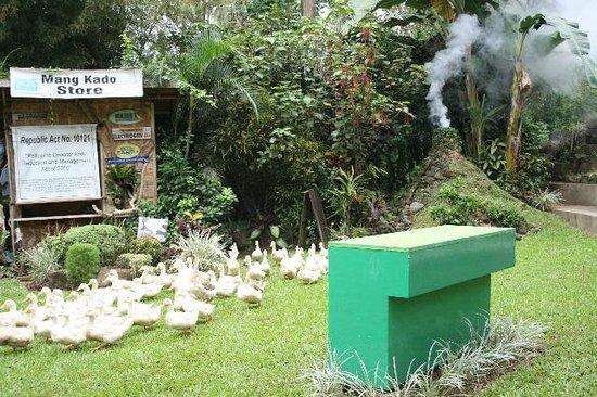 Malagos Garden Resort: Disaster Management