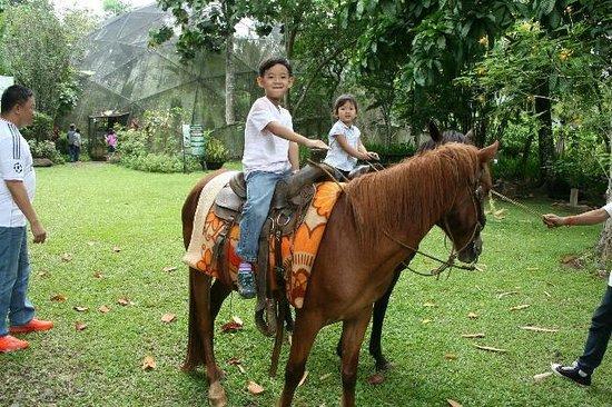 Malagos Garden Resort: Horse back Riding