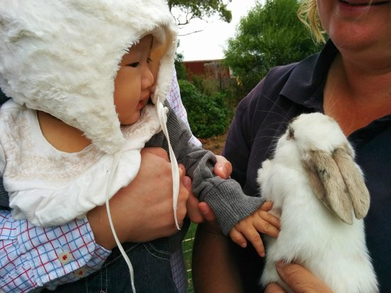Taras Richmond Farmstay : Petting zoo