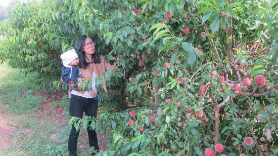 Taras Richmond Farmstay: Peaches!