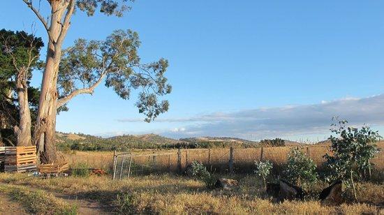 Taras Richmond Farmstay : A view of the property
