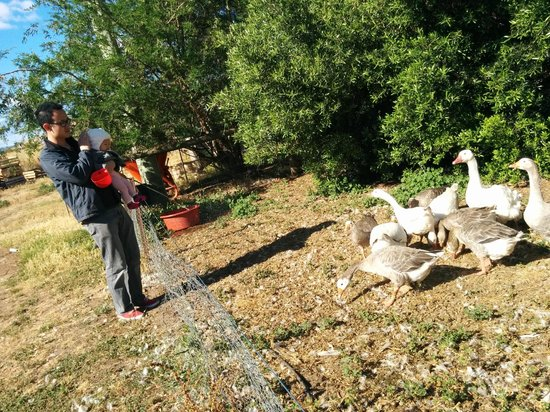 Taras Richmond Farmstay: Feeding the geese