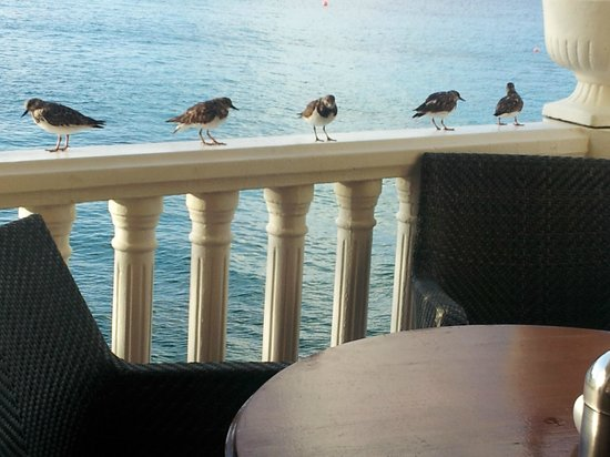 Buddy Dive: birds lined up for breakfast crumbs