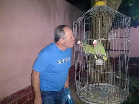 Hostal Buena Vista: The parrots