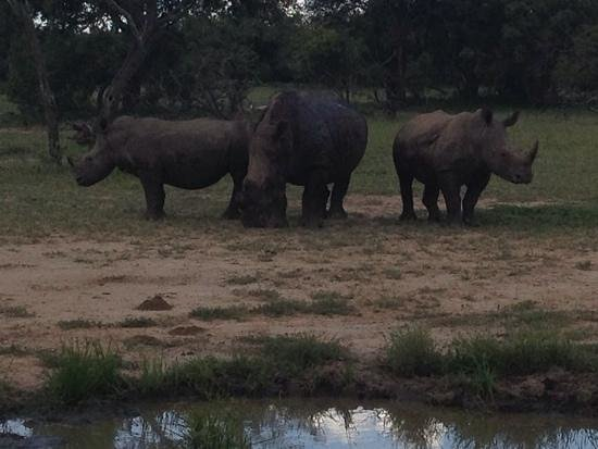 Vuyani Safari Lodge: Rhinos as Vuyani