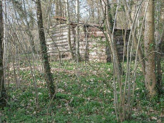 Camping Le Bois du Coderc: Sous bois