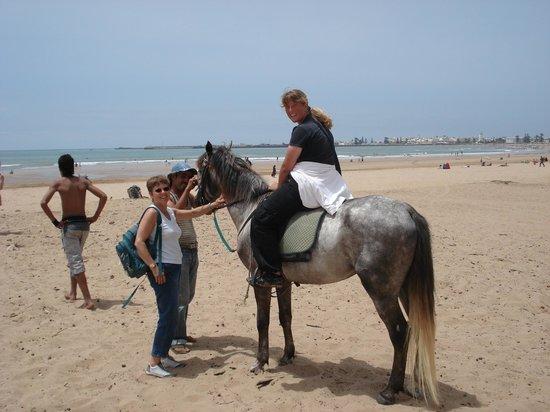 un autre moyen de transport picture of la maison du cheval essaouira tripadvisor
