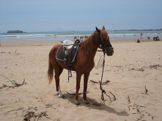 comme une image la maison du cheval essaouira tripadvisor