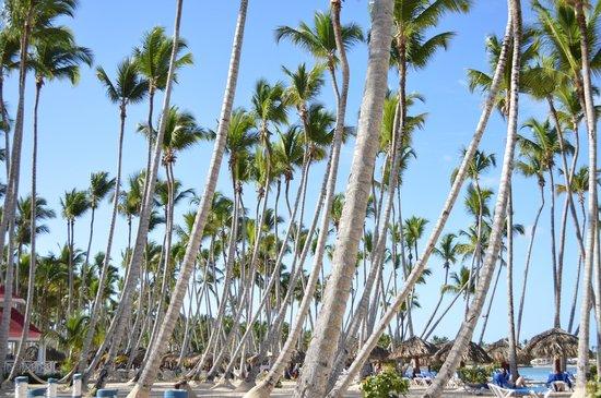 Luxury Bahia Principe Bouganville Don Pablo Collection: palm trees